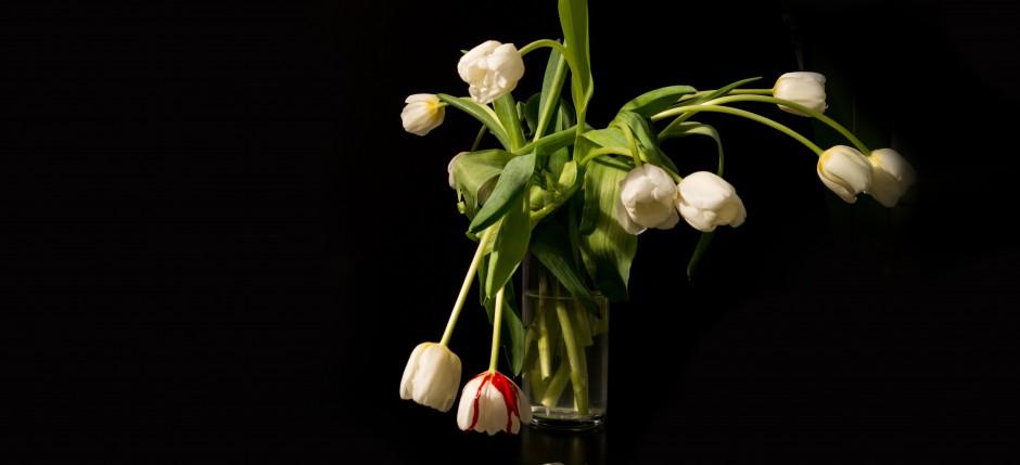 Bloody Tulips: Das Cover-Shooting | Haar-Bazaar